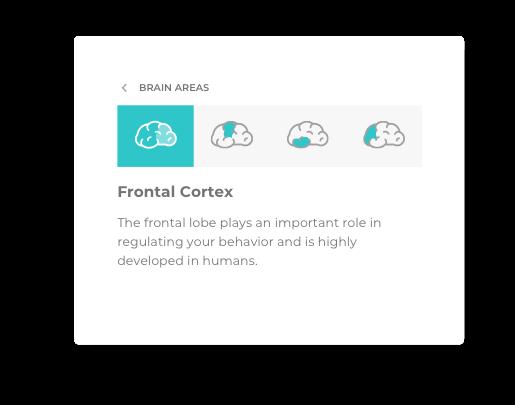 software BrainViz training interface screenshot