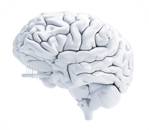white 3d brain for wellness safety and productivity